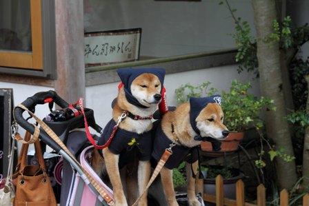 忍者犬変身29