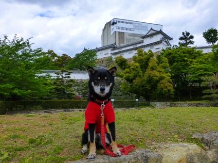 姫路城大天守保存修理期間中10