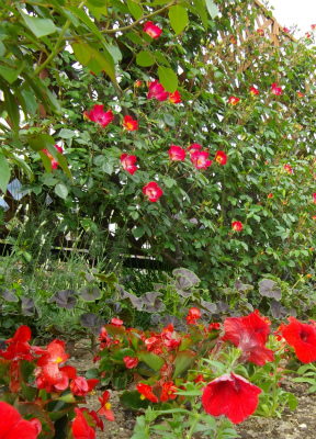 赤花ガーデン