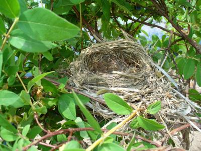 ひばりの巣?