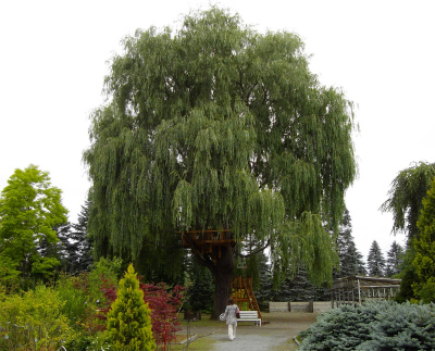 真鍋庭園 2