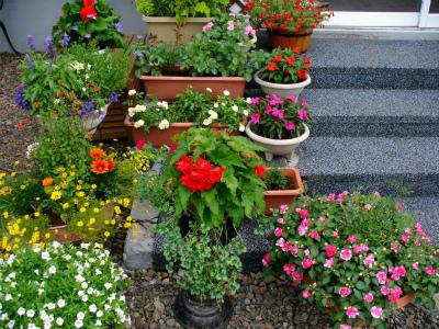 階段上の豆福ガーデン 1