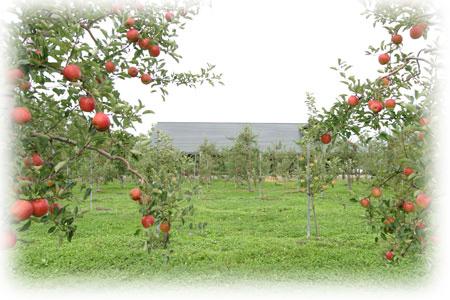 リンゴの森 三谷果樹園HP