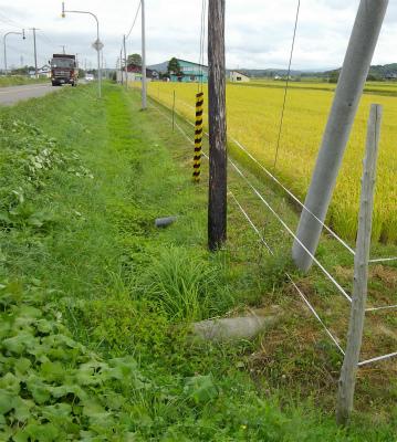 道々沿線にも電気牧柵