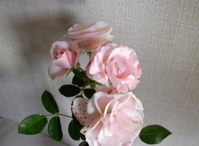 アスピリン切花