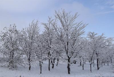 雪の華 3