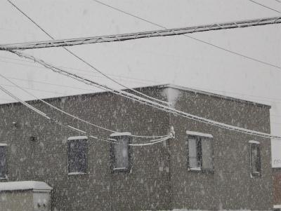 電線に着雪