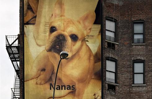 ナナスちゃん