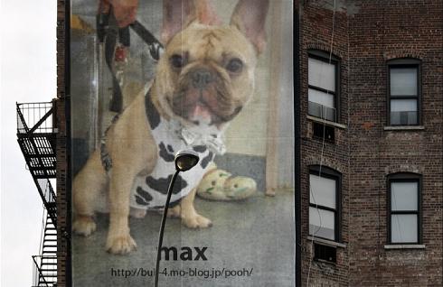 マックス君