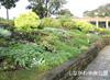 Gardeners of Shinagawa Chuou Park