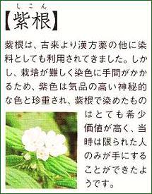 紫根の花です。