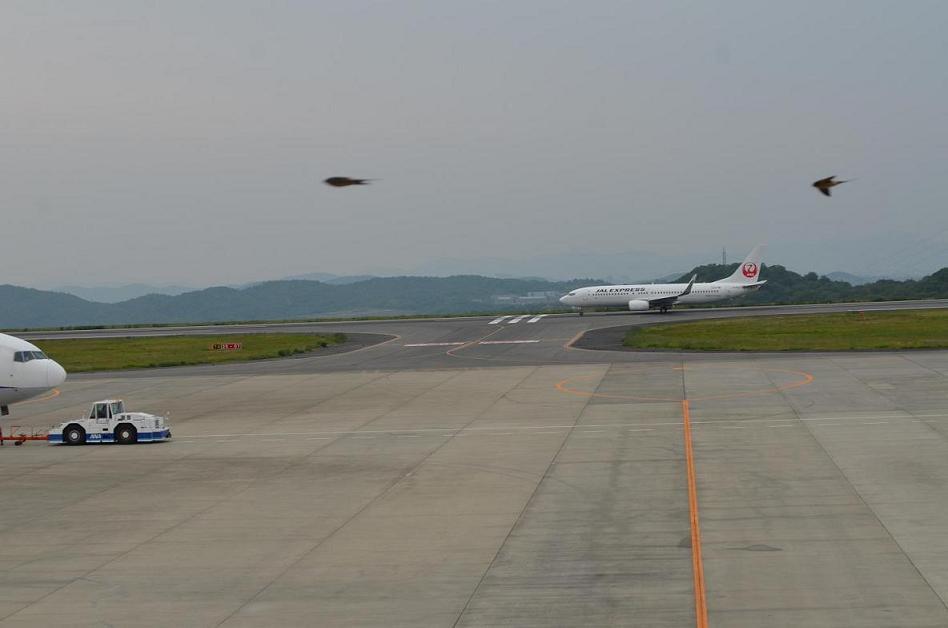 飛行機と鳥