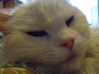 17歳♂ウニ男くん~♪寝てるときだけ静かです(^-^)エサ缶を開ける音を聞くとムクッ~と起きます♪2013.04.18