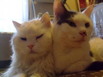左:ウニ男くん(17歳♂)、右:小心オチョビくん(7歳♂)同じ座布団で並んじゃってさ~♪ツルんでいます♪2013.04.24