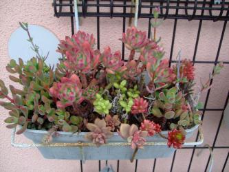 2階ベランダの多肉植物寄せ植え~♪茂ってきました~♪2013.04.28