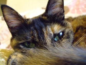 最近見れば見るほど可愛くて~私に馴れているゴマ子ちゃん!5ニャンの中の唯一の♀猫~小さくてムチムチ~2013.03.05