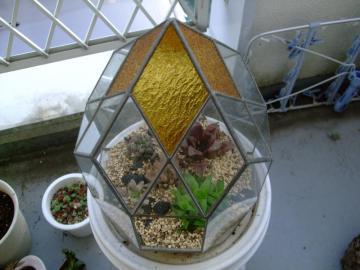お友達手作りステンドグラスのテラリュームにハオルチアを寄せ植えにしてみました~♪2013.03.16