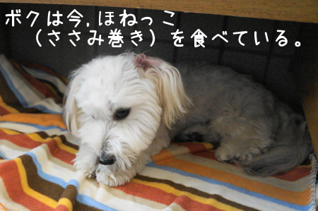 201210130933519a9.jpg
