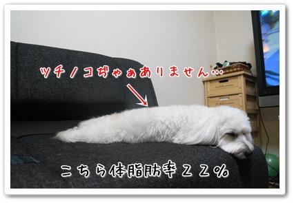 201304192118396e6.jpg