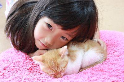 茶次郎かわいい~ 子猫里親募集中☆石川富山福井