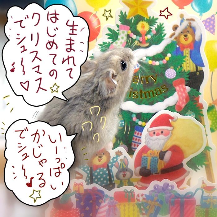 生まれてはじめてのクリスマスでシュー♪