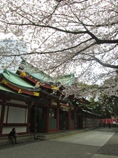 日枝神社、桜