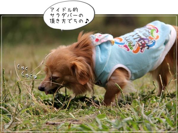 IMG_09221.jpg