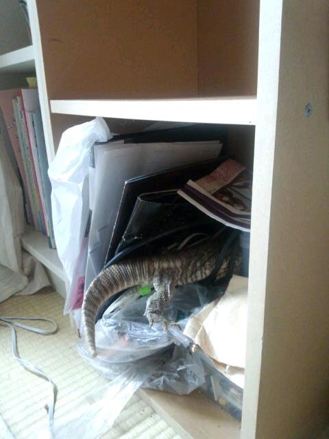 fc2blog_20121013092416c8e.jpg
